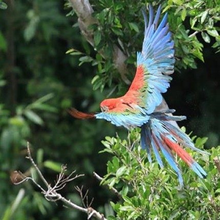 Mashaquipe Pampas & Jungle Combo Tour and Rurrenabaque Flights Discount