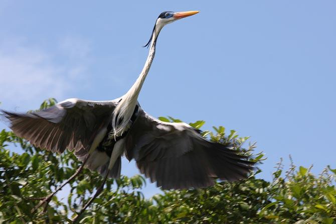 Birds in Pampas Bolivia