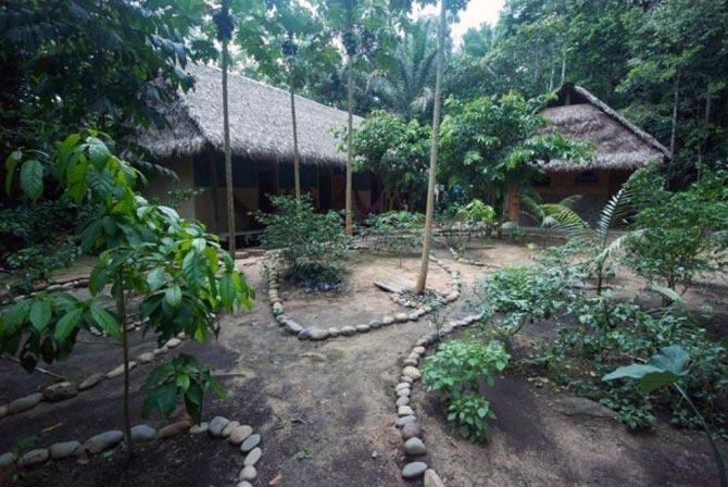 Jungle Tours Madidi Bolivia